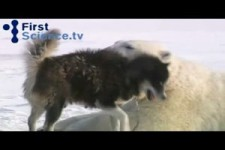 bears dogs play together