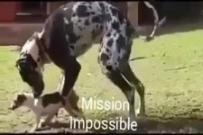 Mission Impossible ...